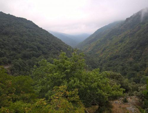 El PARTIDO CASTELLANO-TIERRA COMUNERA (PCAS-TC)  solicita mayor desarrollo del aprovechamiento de la biomasa autóctona